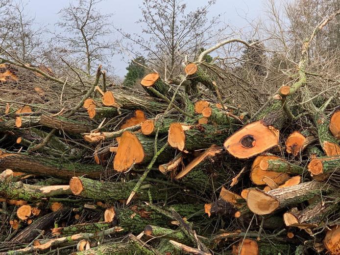 De restanten van de gekapte bomen in Schiebroek.