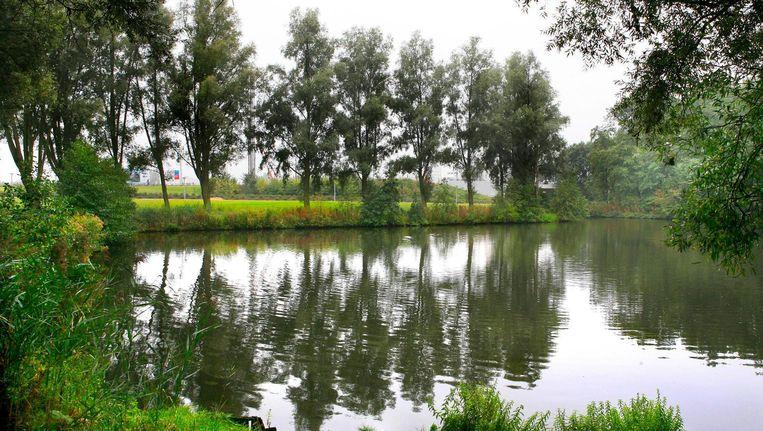 Wilgen in het Rembrandtpark Beeld Parool
