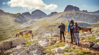 Oostenrijk stelt gedragscode op voor Alpenwandelaars na fatale koe-aanval