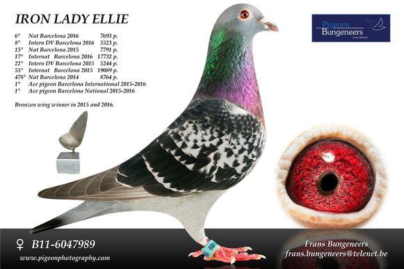 Dé kampioen van duivenmelker Frans Bungeneers: Iron Lady Ellie.
