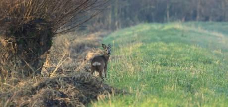 Zoogdieren in de Biesbosch: 'Ik zag de kop van een zeehond'