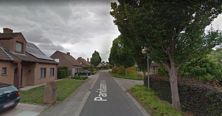 Het gemeentebestuur Zwevegem heeft een 15-tal hoogstammige bomen gerooid in de Paridaanstraat omdat ze volgens de buurtbewoners het zonlicht wegnamen.