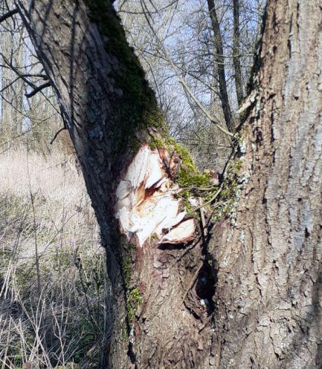 Zo'n 45.000 nieuwe bomen nemen de plaats in van verwijderde, zieke essen in Zuidoost-Friesland