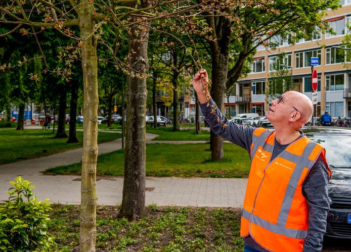 Nog zo'n extreem droge zomer kan volgend jaar wel eens grote gevolgen hebben voor het groen in de stad.