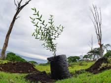 Plus de 20.000 arbres seront plantés à Liège d'ici 2030