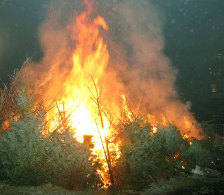 Kerstboomverbranding in den Boskant.