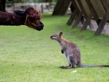 Wilde dieren moeten weg bij Apeldoorns Kinderparadijs Malkenschoten