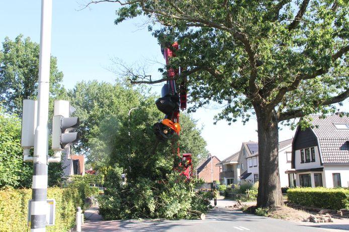 Een van de oudste bomen van de gemeente Hellendoorn is maandagochtend geveld.