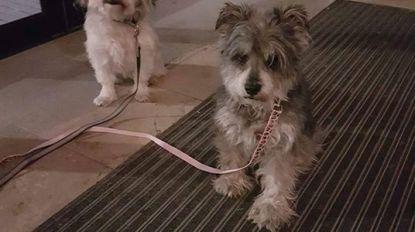 """Hondjes achtergelaten in Nederlands winkelcentrum niet ver van Belgische grens: """"Nou ja, fijne kerst"""""""