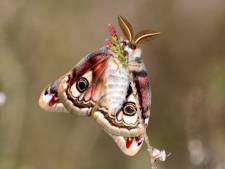 Zomers wintereinde met honderden vlinders