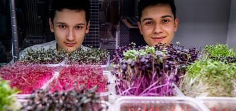 Volgens ondernemers Daniel (15) en Carlos (17) uit Olst moet iedereen aan de microgroenten