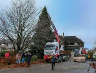 """REPORTAGE. Dit is 'm dan, deze kerstboom van 18 meter hoog zal Brusselse Grote Markt inpalmen: """"27 jaar geleden gekregen als kerstgeschenk"""""""