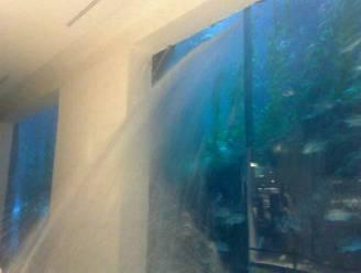 Grootste aquarium ter wereld barst in winkelcentrum Dubai