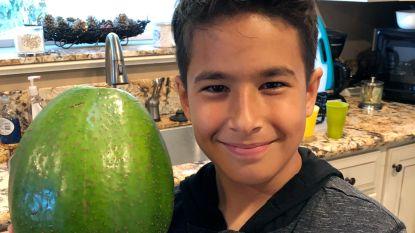 Familie uit Hawaï heeft met deze gigantische avocado een wereldrecord beet