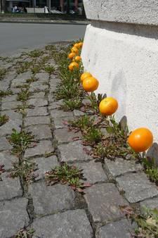 Straatbeeld: ook het bloemenvrouwtje is in de ban van Oranje