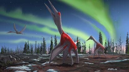Een van de grootste vliegende dinosaurussen geïdentificeerd in Canada