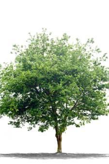 In Nuenen mag een nieuw gebouw nog steeds niet hoger zijn dan een volwassen boom