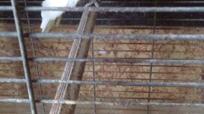 Politie neemt vijftien dieren in beslag