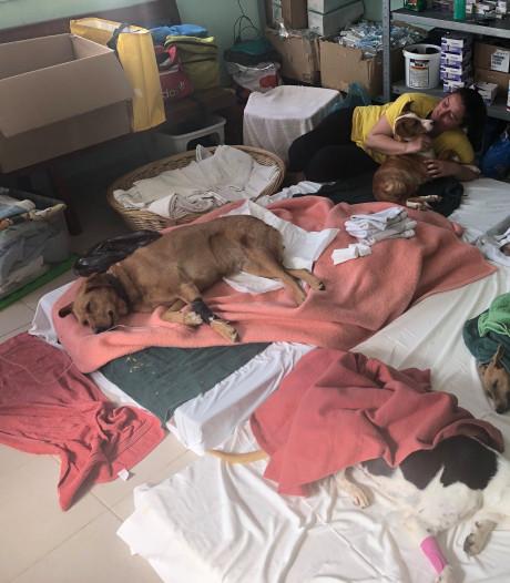 Castratie honden en katten door Utrechtse dierenarts live te volgen