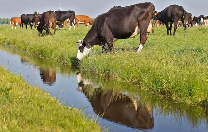 NBB houdt een thema-avond over de waterhuishouding op Noord-Beveland. Wat moet er gebeuren om zowel droogte als wateroverlast in de toekomst te voorkomen?
