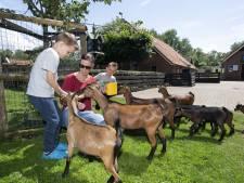 Kinderboerderij Haaksbergen weer open: 'Alle biggen, geiten en schapen zijn geboren. En niemand zag het'