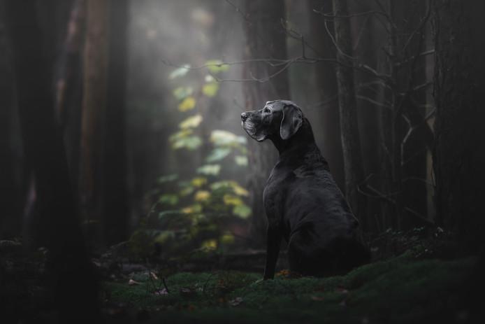 Met deze sfeer volle foto van de ernstig zieke hond Noa won Monica van der Maden de eerste prijs in de categorie Senior en werd ze algeheel winnaar uit tienduizend inzendingen uit zeventig landen.