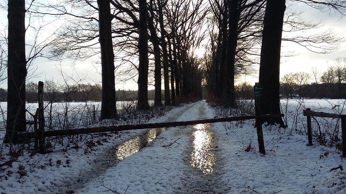 Fraai plaatje van een besneeuwd wandelpad tussen de bomen in IJzevoorde.