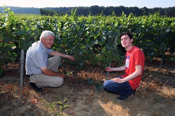 Wijnboer Paul Vleminckx en zoon Laurens van Chardonnay Meerdael bij hun wijnranken.
