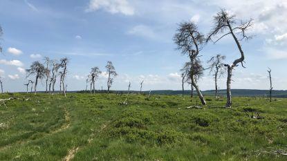 Ontdek een mooi stukje Ardennen: 4 verrassende tips met vuur in de hoofdrol