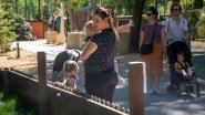 """Gezinnetjes komen opnieuw dieren turen in familiepark Harry Malter: """"Hopelijk gaat ook de speeltuin snel open"""""""