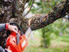 Bomen gekapt voor geluidswal langs de snelweg A58 in Kapelle
