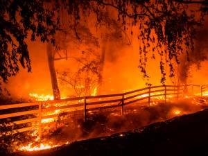 Ils se marient en Californie tandis que les vignobles brûlent: la photo étonnante