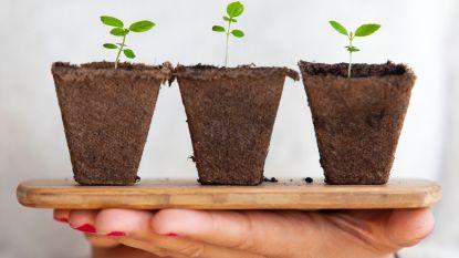Jouw plant op de Floraliën? Organisatie zoekt 'plantjes met een verhaal'