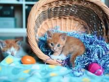 Dit wil je: een avond kattenfilmpjes kijken in de bioscoop