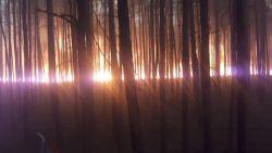 Duitse wandelaar steekt uitwerpselen in brand en veroorzaakt bosbrand