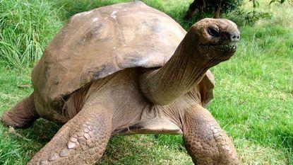 Oudste schildpad ter wereld heeft per ongeluk al 26 jaar homorelatie