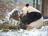 Ouwehands Dierenpark Rhenen blijft dicht vanwege sneeuw