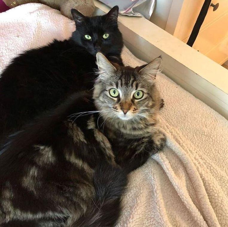 Tina en Louise in hun appartement in San José.