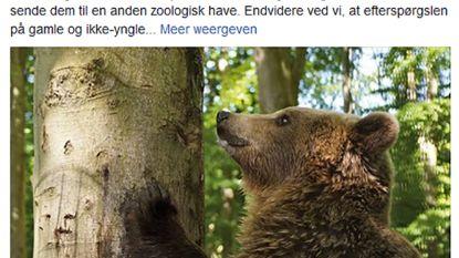 Deense dierentuin doodt onbruikbare beren