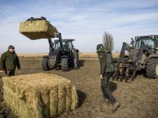 Grote grazers in Oostvaardersplassen langer bijgevoerd, maar met minder hooi