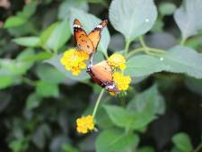 Bloemrijke velden ingezaaid in Goudse Hout voor bijen en vlinders