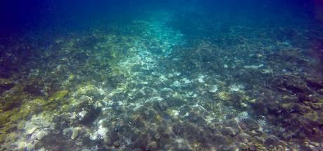 Australië looft 1,3 miljoen euro uit voor redding Great Barrier Reef