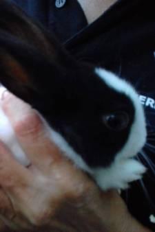 Vrouwen redden konijntje in dichtgeknoopte zak van verstikkingsdood