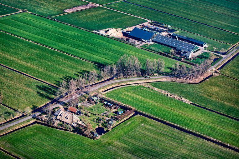 Boerderijen in de buurt van het Friese Oudega. De teloorgang van bloemen, planten, vogels en insecten is volgens critici te wijten aan de grootschalige veehouderij en akkerbouw. Veel boeren vinden de verwijten onterecht. Beeld null
