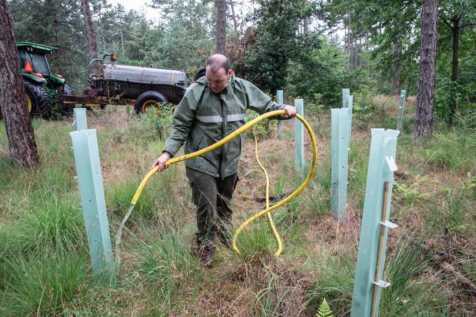 Jonge aanplant water geven in Leenderbos Leende.