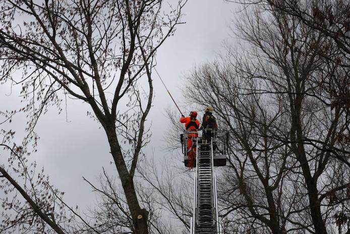 Aan de Oudeweg in Reeuwijk was een boom omvergeblazen. De brandweer moest de hoogte in om de gevaarlijke takken af te zagen.