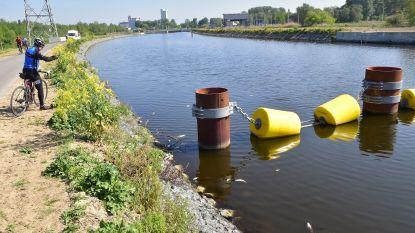 Zuurstofpeil in de Schelde weer in orde: grootste milieuramp ooit lijkt vermeden