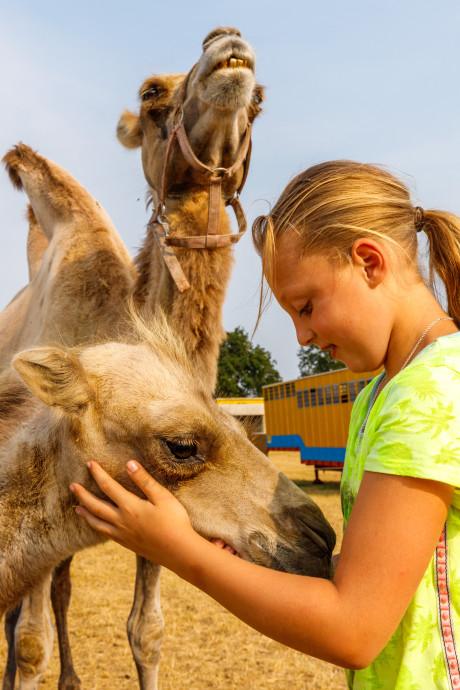 Geen olifanten meer, wel paarden en kamelen bij Circus Renz