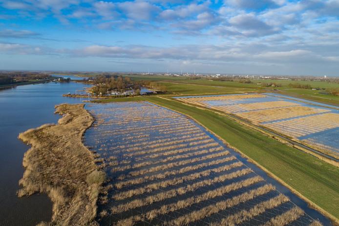 Voor het project Ruimte voor de Rivier IJsseldelta is een grote oppervlakte met rietmoeras langs het Drontermeer aangelegd.