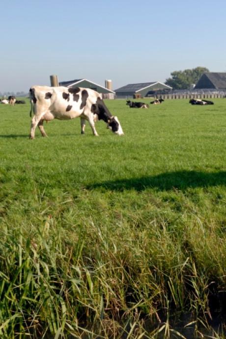Meer onderzoek vee in wei in Bergeijk